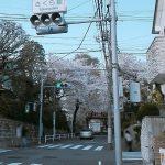 桜坂の場所
